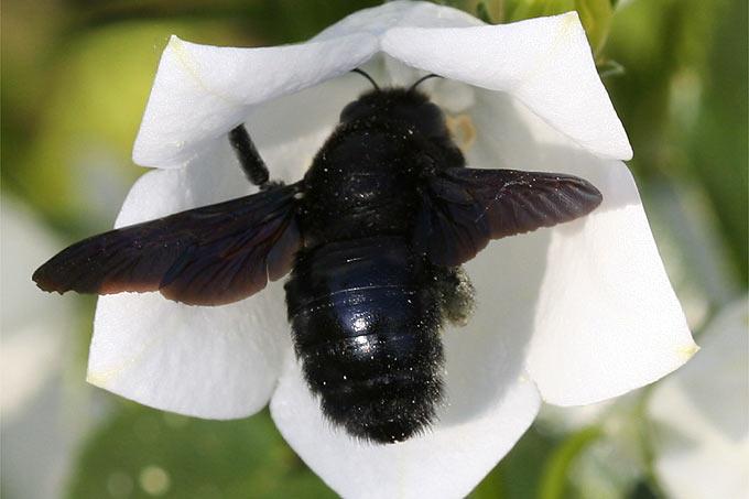 insektensommer nabu hessen